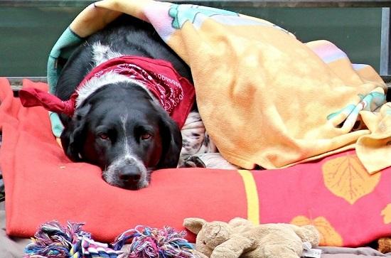 dog_blanket