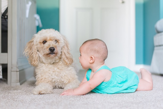 baby_with_dog
